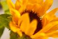 Flower Unpower
