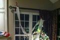 Tree Roller