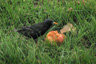 Blackbird, Get Your Grub On!